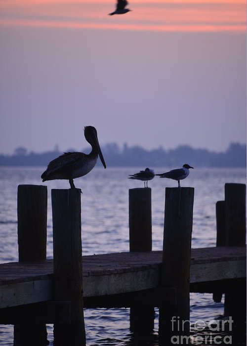 Joanmcarthur Greeting Card featuring the photograph Dawn Brings Hungry Birds by Joan McArthur