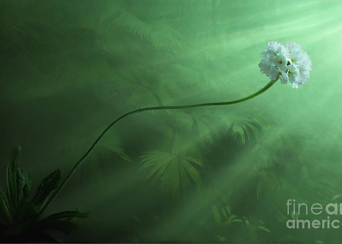 White Greeting Card featuring the digital art Dawning by John Edwards