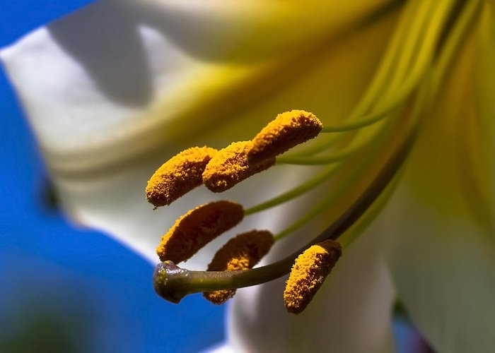 Day Lilly Greeting Card featuring the photograph Day Lilly Macro With Sky Background by Sven Brogren