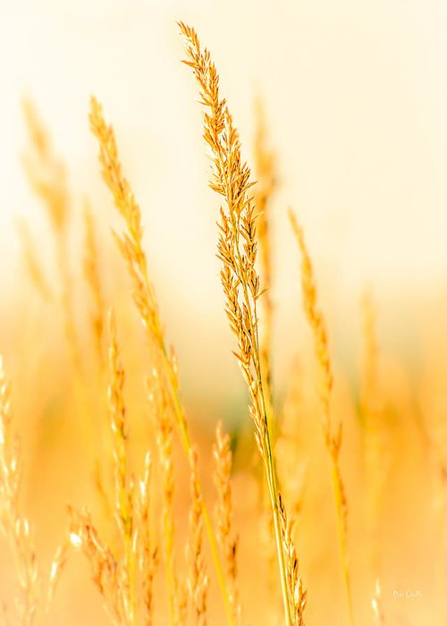 Grass Greeting Card featuring the photograph Daydream by Bob Orsillo