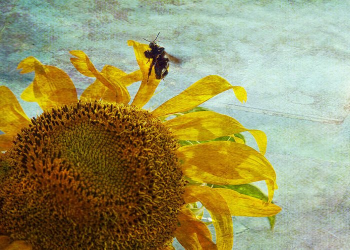 Sunflower Greeting Card featuring the photograph Daydreaming by Toni Hopper