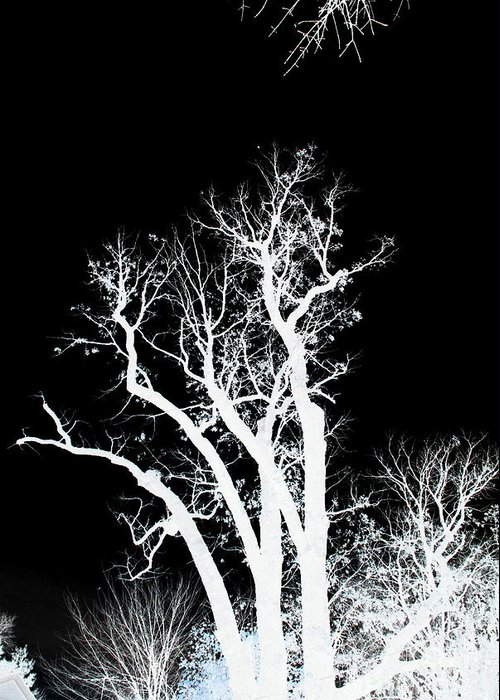 Tree Greeting Card featuring the photograph Dazmiint by Alex Blaha