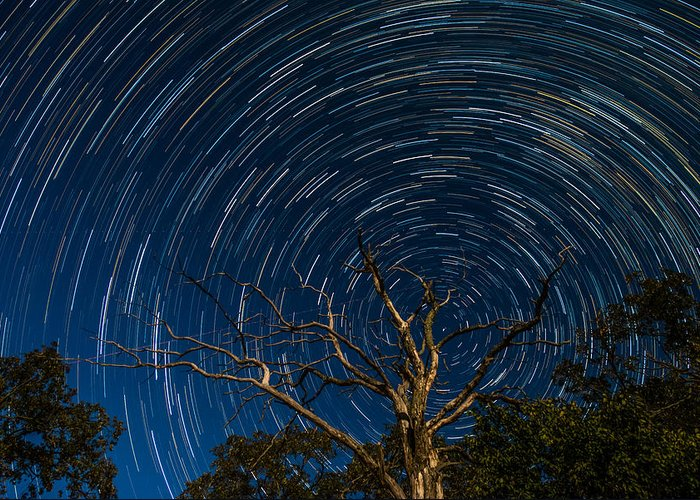 Star Greeting Card featuring the photograph Dead Oak With Star Trails by Paul Freidlund