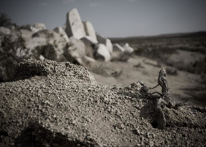 Landscape Greeting Card featuring the photograph Dead Root Worshiping The Rock God by Lisa Cowley