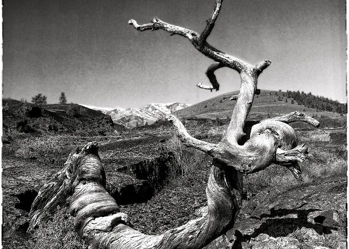 West Greeting Card featuring the photograph Dead Tree Craters Of The Moon Id by Hal Norman K