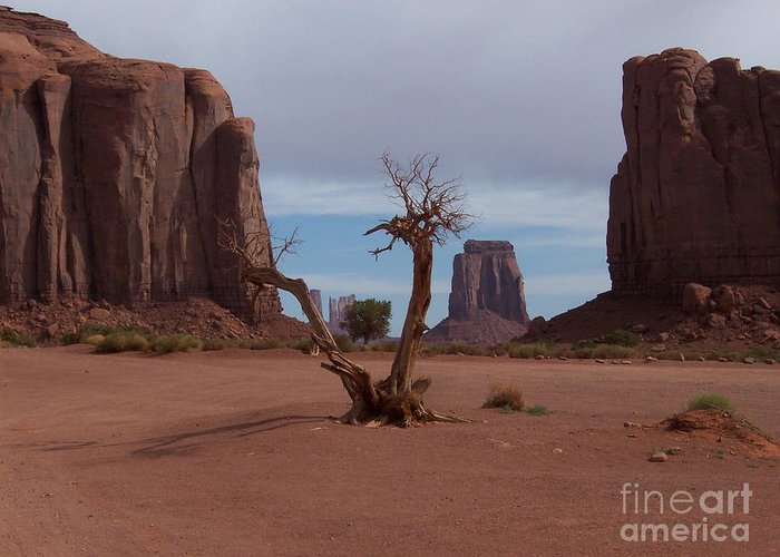 Monument Valley Greeting Card featuring the photograph Dead-wood by Luke Moore