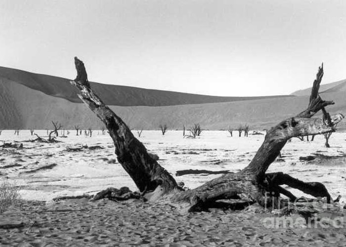 Acacia Trees Greeting Card featuring the photograph Deadvlei by Susan Chandler