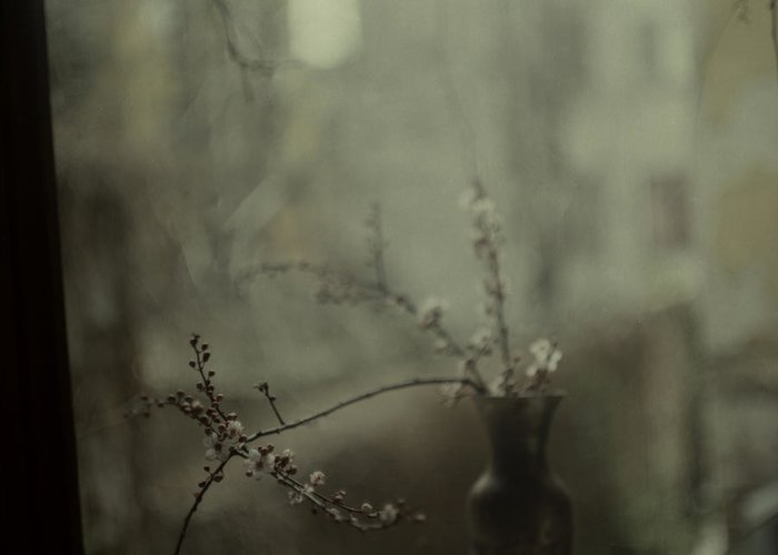 spring blossomstillife Greeting Card featuring the photograph Dear April by Katia Chausheva