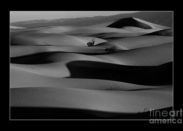 Landscape Greeting Card featuring the photograph Death Valley Dunes by Marjorie Young
