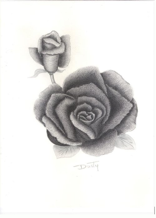 Rose Greeting Card featuring the drawing Decisive by Dusty Reed