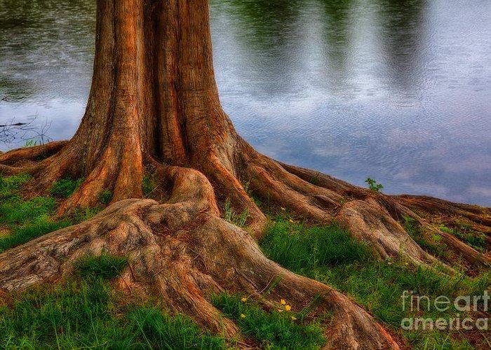 North Carolina Greeting Card featuring the photograph Deep Roots - Tree On North Carolina Lake by Dan Carmichael