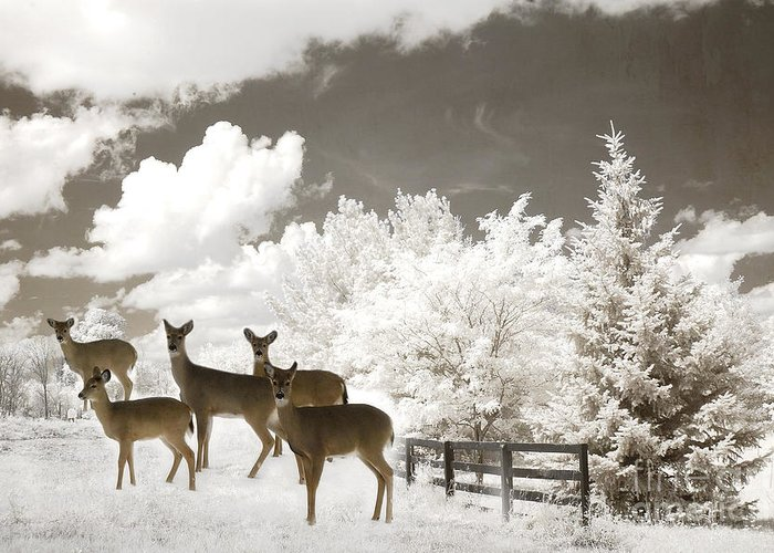 Deer Snow Forest Weather Pattern Christmas Candle Greeting Postcard Congrats Mailing Card