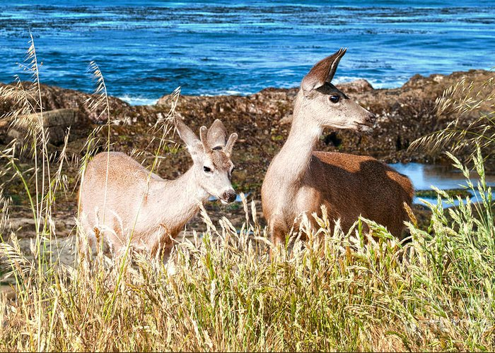 State Beach Near Big Sur Greeting Card featuring the photograph Deer On The Beach At Point Lobos Ca by Artist and Photographer Laura Wrede