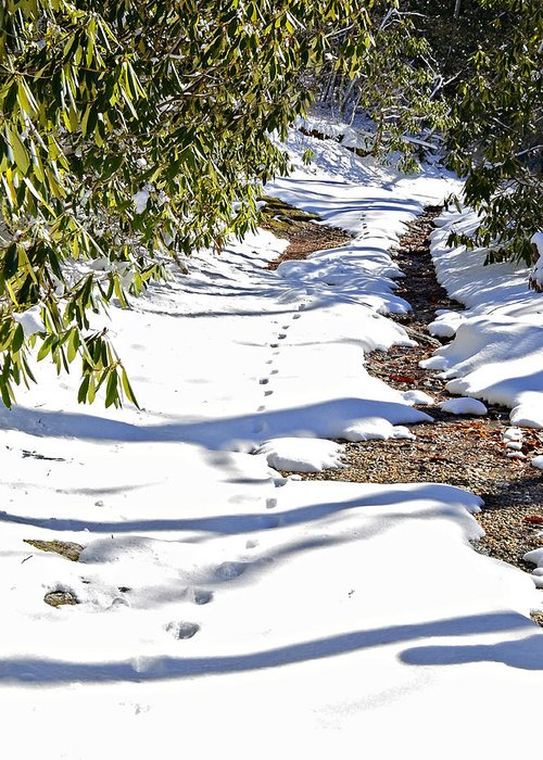 Snow Greeting Card featuring the photograph Deer Trail by Susan Leggett