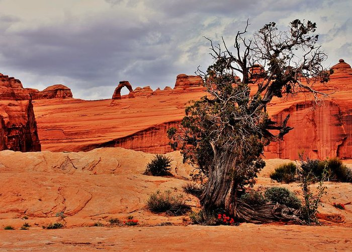 Utah Greeting Card featuring the photograph Delicate Strength by Benjamin Yeager