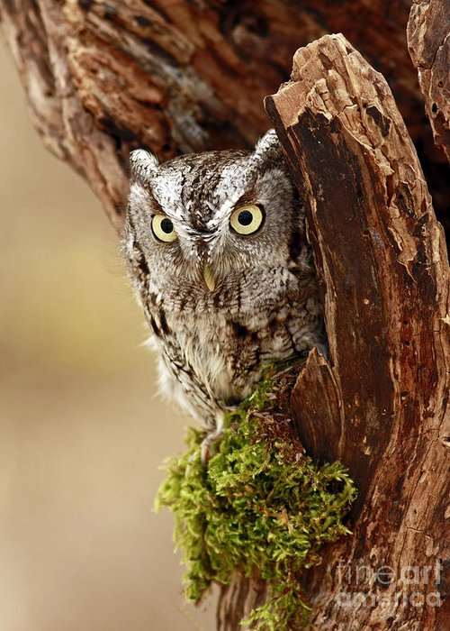 Eastern Screech Owl Greeting Card featuring the photograph Delighted By The Eastern Screech Owl by Inspired Nature Photography Fine Art Photography