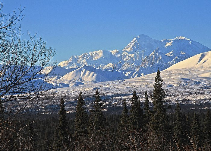 Denali Greeting Card featuring the photograph Denali Winter by Donna Quante