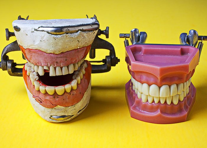 Dental Models Greeting Card featuring the photograph Dental Models by Garry Gay