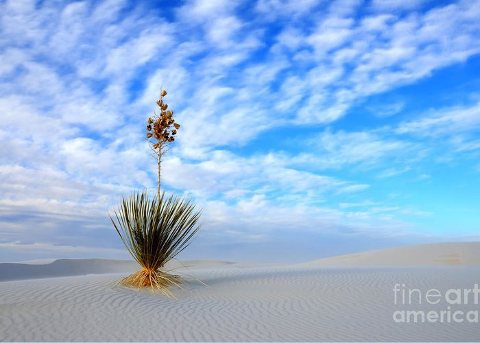 Alamogordo Greeting Card featuring the photograph Desert Beauty White Sands New Mexico by Bob Christopher