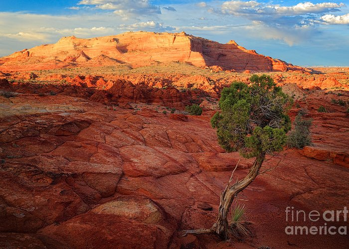 America Greeting Card featuring the photograph Desert Juniper by Inge Johnsson