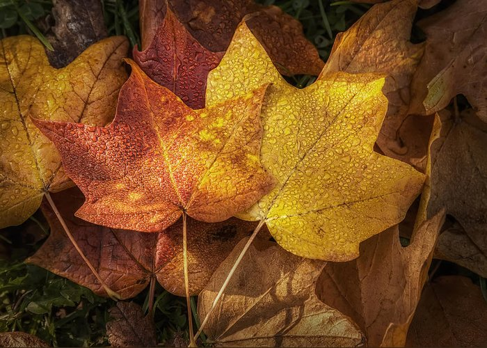 Leaf Greeting Card featuring the photograph Dew On Autumn Leaves by Scott Norris