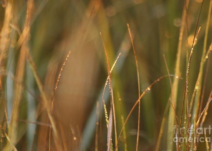 Dew Greeting Card featuring the photograph Dewy Grasses by Nadine Rippelmeyer