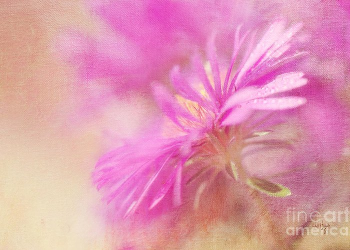 Aster Greeting Card featuring the photograph Dewy Pink Asters by Lois Bryan