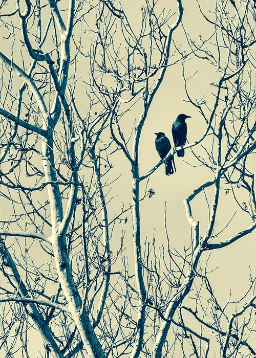 Blackbirds Greeting Card featuring the photograph Differing Views by Caitlyn Grasso