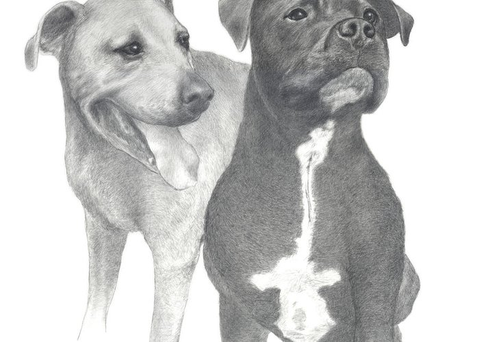 Pencil Drawing Print Greeting Card featuring the drawing Dippy And Muggs by Joe Olivares