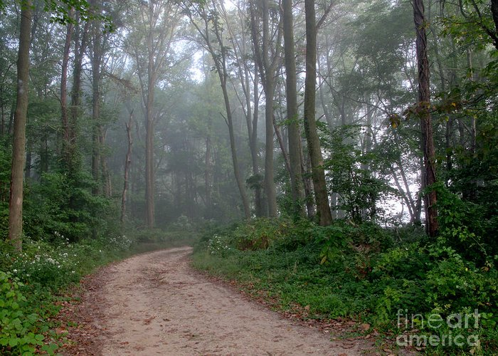Path Greeting Card featuring the photograph Dirt Path In Forest Woods With Mist by Olivier Le Queinec
