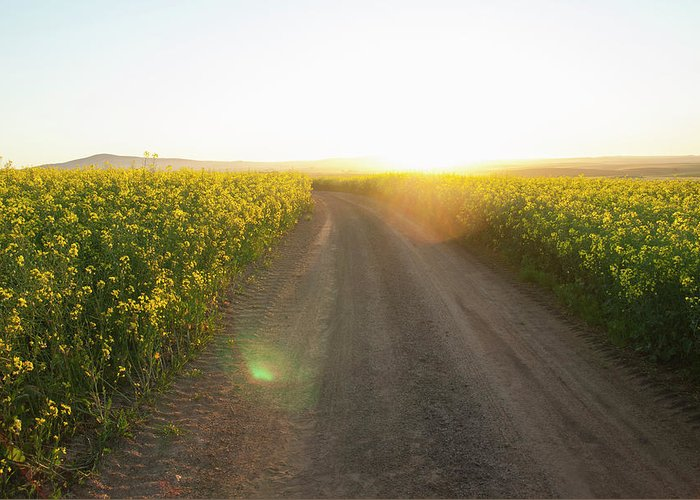 Tranquility Greeting Card featuring the photograph Dirt Road In Field Of Flowers by Luka