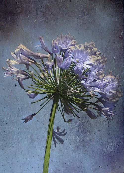 Flower Greeting Card featuring the photograph Dirty Sky by Eagle Finegan