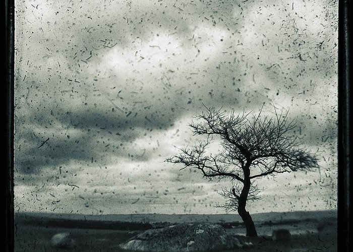 Tree Greeting Card featuring the photograph Disdain by Andrew Paranavitana