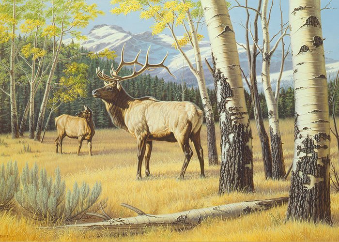 Yellowstone Park Greeting Cards