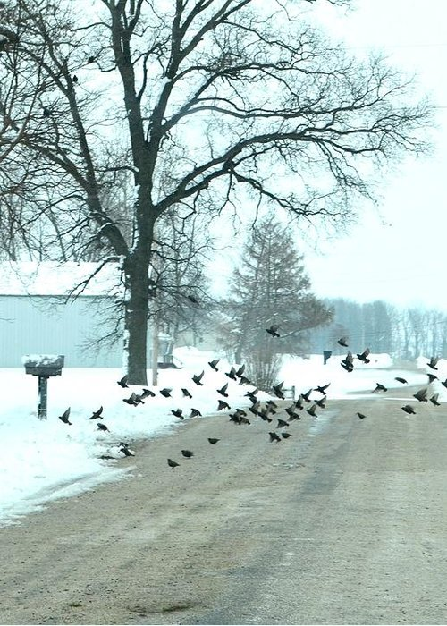 Indiana Winters Greeting Card featuring the photograph Disturbing The Flock by Julie Dant