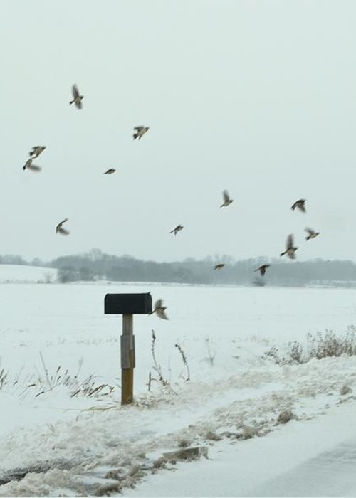 Winter Greeting Card featuring the photograph Disturbing The Winter Foragers by Julie Dant