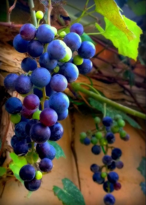 Grapevine Greeting Card featuring the photograph Divine Perfection by Karen Wiles
