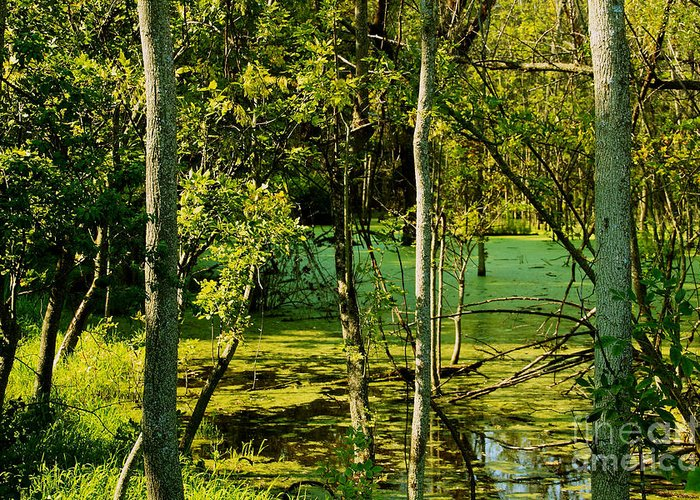 Wetlands Greeting Card featuring the photograph Do Not Disturb by William Norton