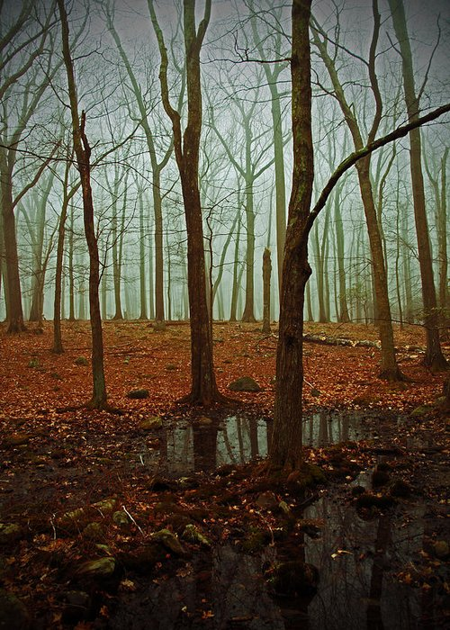 Woods Greeting Card featuring the photograph Do We Dare Go Into The Woods by Karol Livote