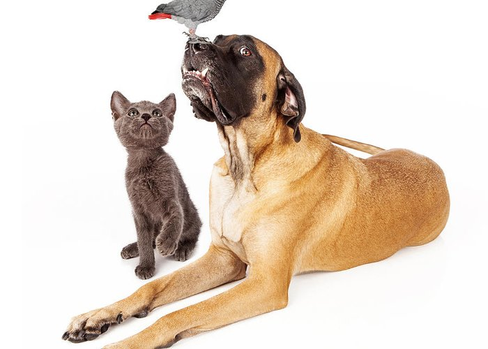 Dog Greeting Card featuring the photograph Dog And Cat Looking At A Bird by Susan Schmitz