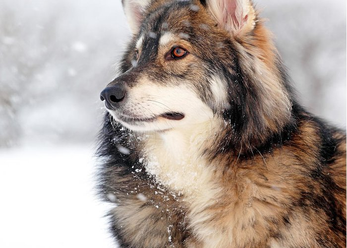 Dog Greeting Card featuring the photograph Dog In The Snow by Grant Glendinning