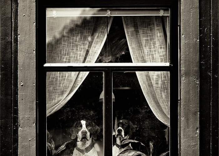 Dogs Greeting Card featuring the photograph Dogs by Julien Oncete