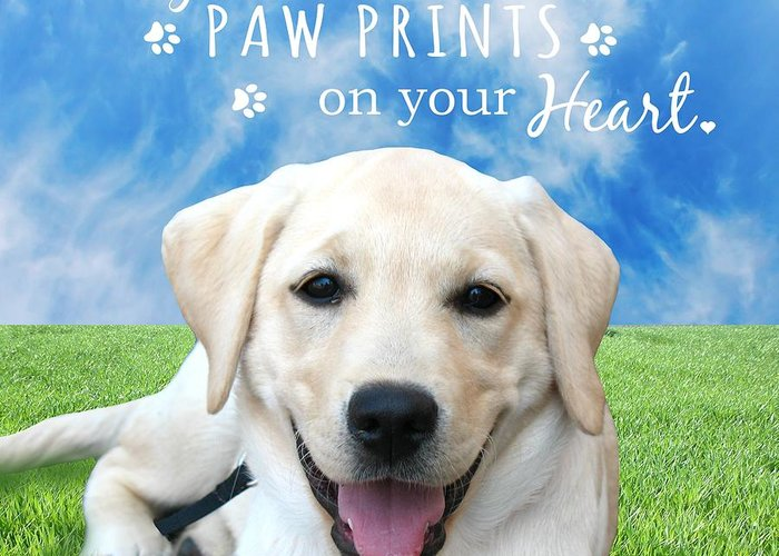 Dog Greeting Card featuring the photograph Dogs Leave Paw Prints On Your Heart by Li Or