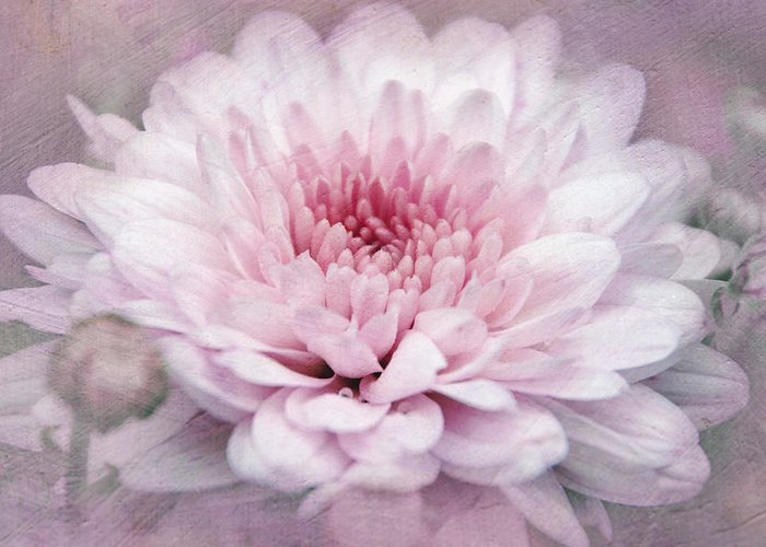 Flowers Greeting Card featuring the photograph Dolled-up Dahlias by Leda Robertson