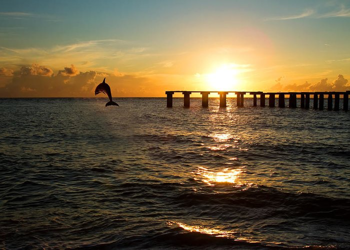 Background Greeting Card featuring the photograph Dolphin Jumping Out Of The Sea In Florida by Fizzy Image