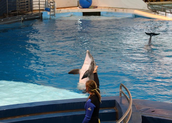 Inner Greeting Card featuring the photograph Dolphin Show - National Aquarium In Baltimore Md - 1212145 by DC Photographer