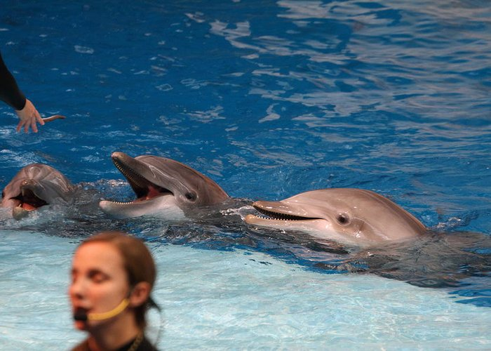 Inner Greeting Card featuring the photograph Dolphin Show - National Aquarium In Baltimore Md - 1212177 by DC Photographer