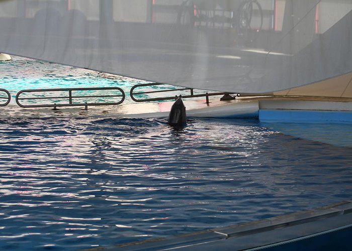 Inner Greeting Card featuring the photograph Dolphin Show - National Aquarium In Baltimore Md - 121219 by DC Photographer