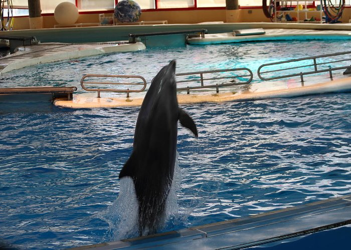 Inner Greeting Card featuring the photograph Dolphin Show - National Aquarium In Baltimore Md - 1212209 by DC Photographer