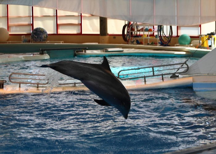 Inner Greeting Card featuring the photograph Dolphin Show - National Aquarium In Baltimore Md - 1212215 by DC Photographer